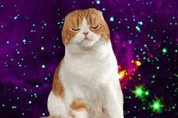 Planet Tan posted GIFs Of Cats In Space